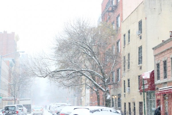 TheBigSnowJan2015_SnowyTrees